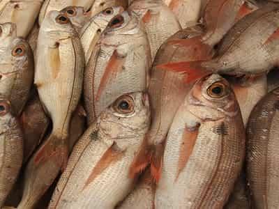 El pescado azul en la dieta infantil