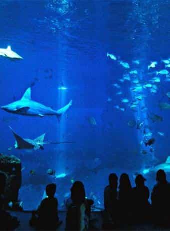 Tiburones en el aquarium