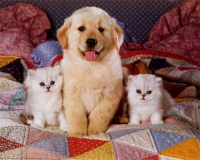 gatos-y-perritos.jpg