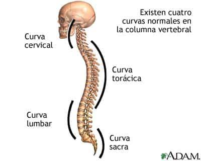 espina-bifida-curva.jpg