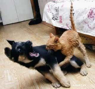 gato-mordiendo-perro