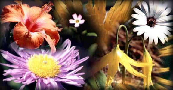 flores-del-bosque