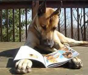 perro-leyendo-revista