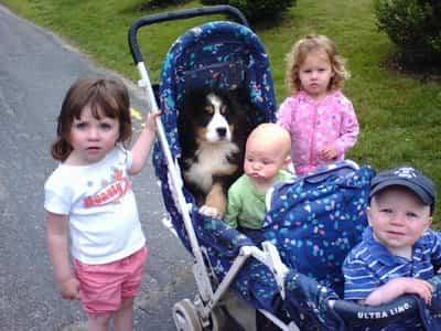 bebes y el perro
