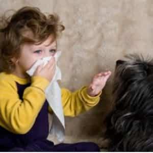 alergia a los animales