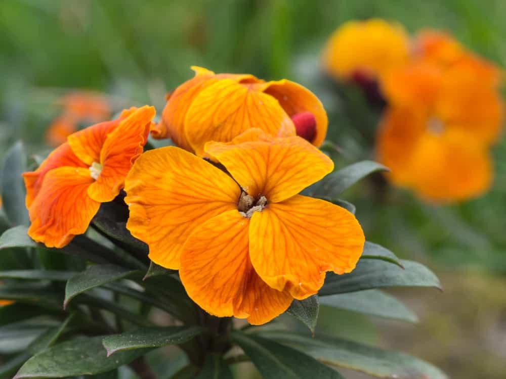 nombre de flores bebes 2