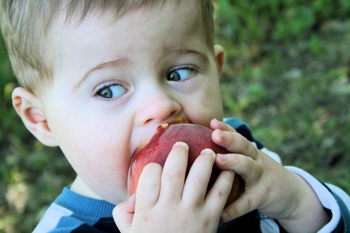 alimentacion frutas ninos
