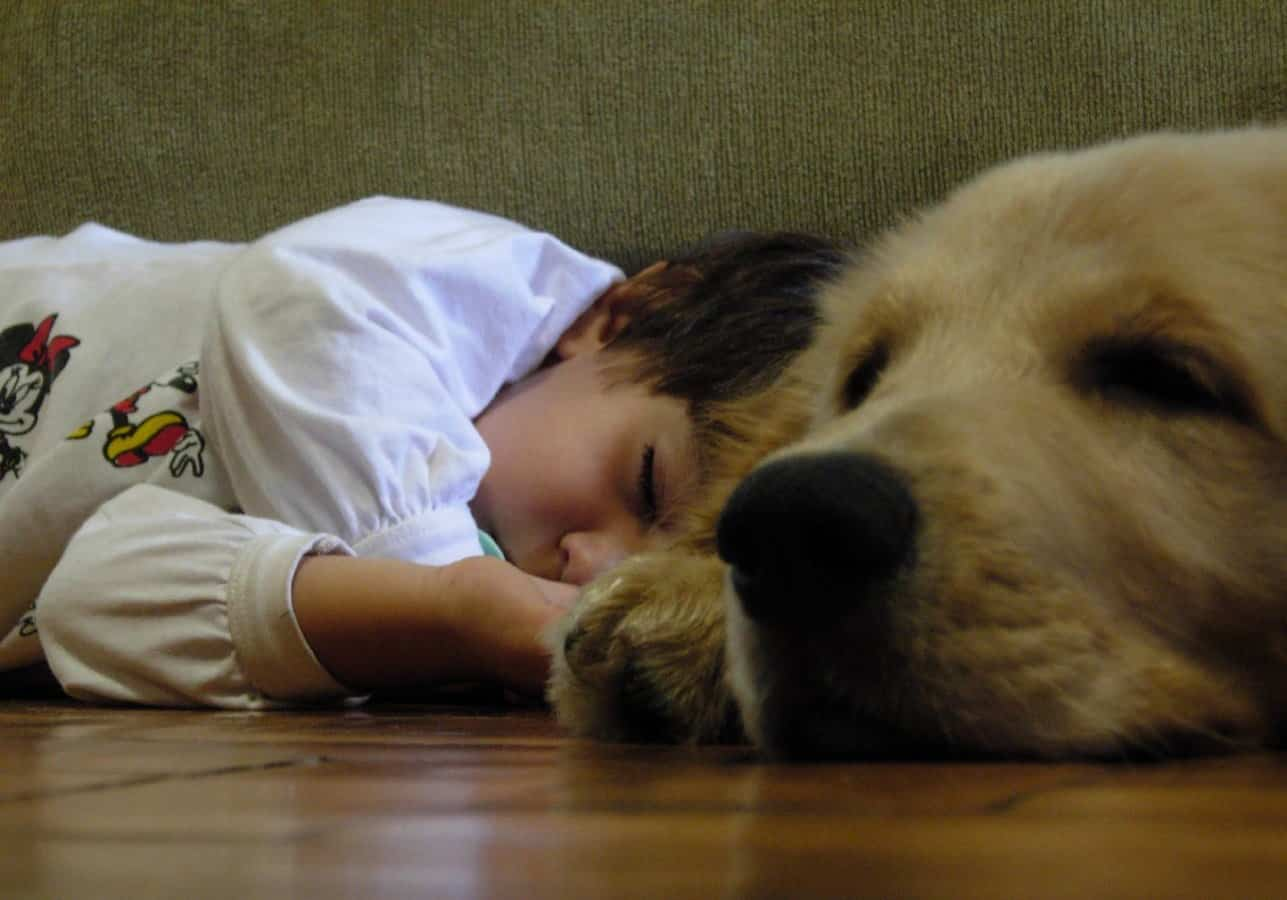 boy and dog sleep 1383732