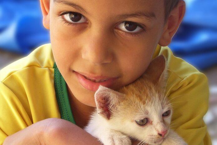 kittens 2 1360054
