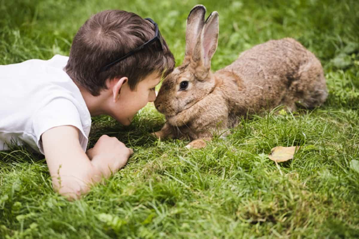 primer plano nino acostado hierba verde mirando ojo conejo 23 2147924080